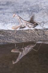 Mantis and reflex