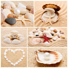 collection of seashells. pearl on the seashell . The exotic sea