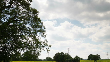 beautiful tree in an english countryside meadow during summer