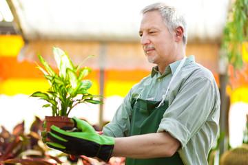 Greenhouse employee