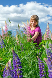 Cute child girl collects summer lupine flowers