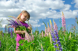 Child girl in summer flower field