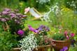 Gartenidylle mit Leiterwagen - 54024667
