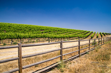 Grapevines of California