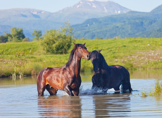 Two beautiful horses stand in the mountain lake