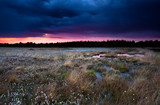 purple stormy sunset over swamp
