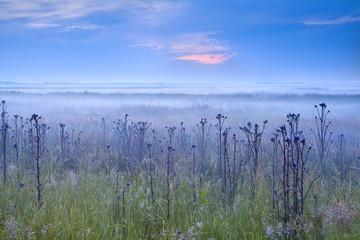 early blue misty morning