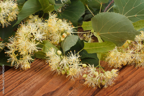 Linden yellow flowers on a brown wooden table