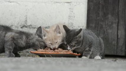 Katzenkinder am fressen
