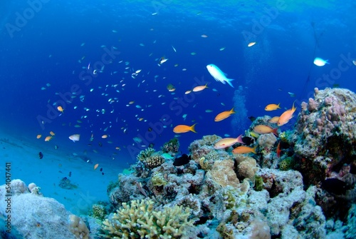 Leinwanddruck Bild ハナダイと珊瑚礁