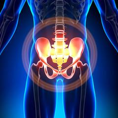 Hip / Sacrum / Pubis / Ischium / Ilium - Anatomy Bones