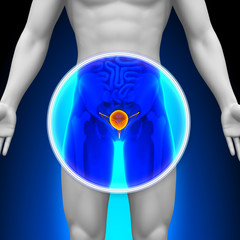 Medical X-Ray Scan - Bladder