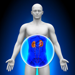 Medical X-Ray Scan - Kidneys