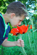 A boy stands near flowers poppies.