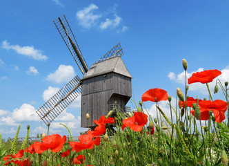 Moulin à vent et coquelicots