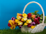 tulips in basket colors background. green gras