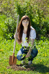 female gardener planting  raspberry