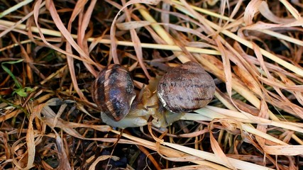 two snails in grass