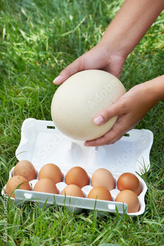 Pack of eggs and ostrich egg in woman hands