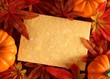 Autumn or thanksgiving greeting card with copy space