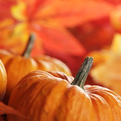 Close-up of pumpkins and autumn leaves background