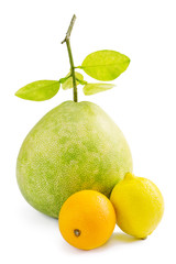 Green Pomelo fruit with lemon and orange, on white
