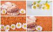 Collage Muscheln und Gänseblümchen