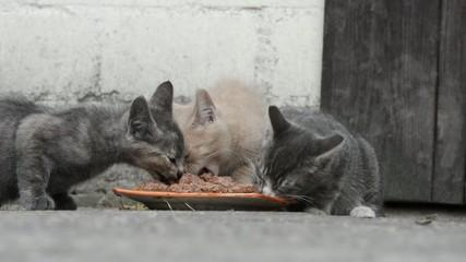 Katzen am fressen