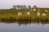 few sheep reflected in river