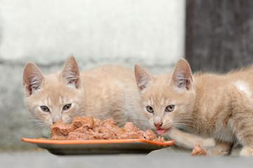 Kätzchen am gressen