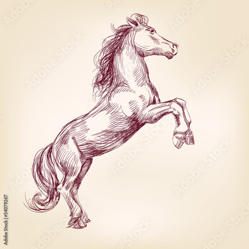 horse vector llustration