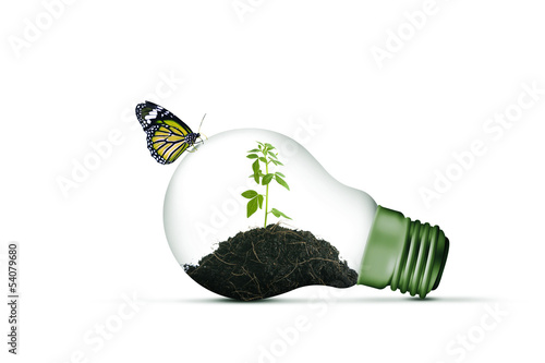 Lamp bulb and a plant inside