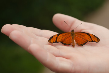 Close-up of Person Holding Butterfly In Hand