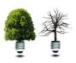 Lampe mit Grünem und Kahlem Baum