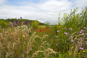 Wild flowers in a field in summer