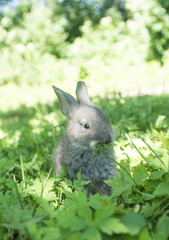 rabbit grass gray