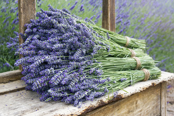 Pile of lavender flower bouquets