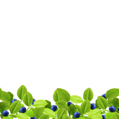 Blueberry and green leaves