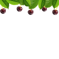 Cherry and leaves border