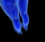 Anatomy of human Legs