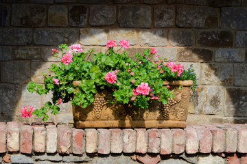 Flowers in  terracotta box