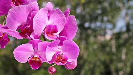 Pink orchid in nature