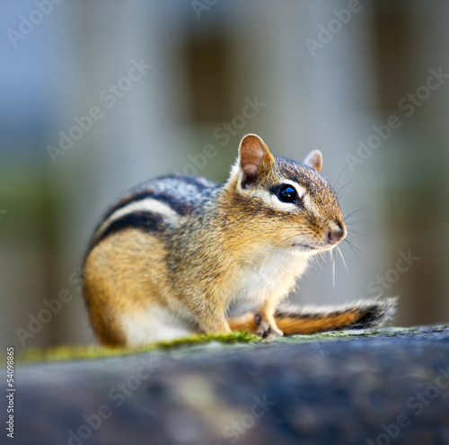 Chipmunk sitting on log