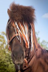 Insektenschutz beim Pferd