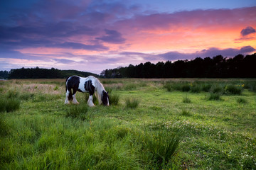 Apache horse grazing at sunset