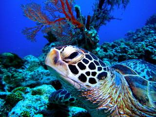 海亀の横顔