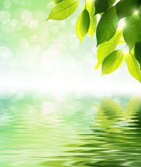 若葉と水の輝き