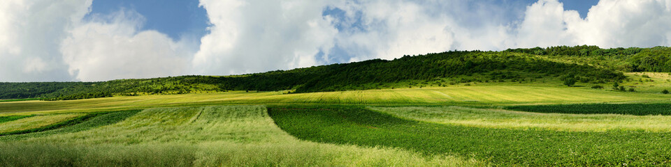 Panorama of agricultural land
