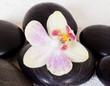 orchidée sur pierres zen