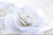 Beautiful white roses on white background.